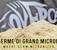 Germe di Grano Micronizzato Over Carp Baits